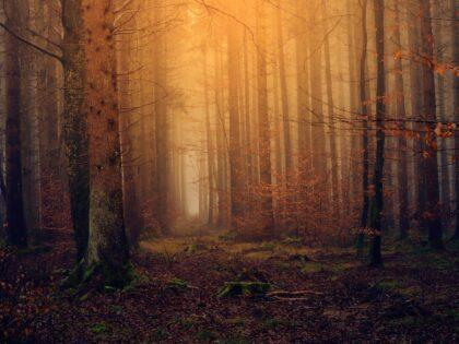 Szesnastolatka zakopana żywcem w lesie! Sprawców ścigała rodzina, bo policja zbagatelizowała sprawę!