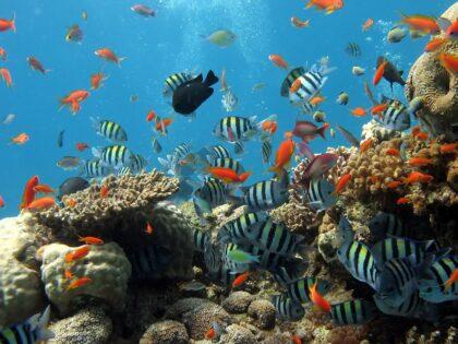 Koralowce Fiji odżyły po Winstonie! Cyklon zniszczył rafę 5 lat temu!